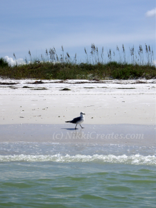 Caladesi Island with Bird